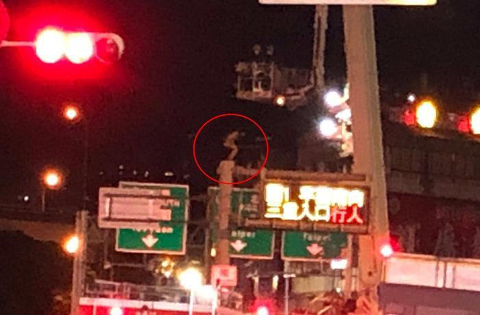 Cô gái mặc quần đùi trèo cột đèn cao 8m, nghi muốn tự tử Ảnh 1