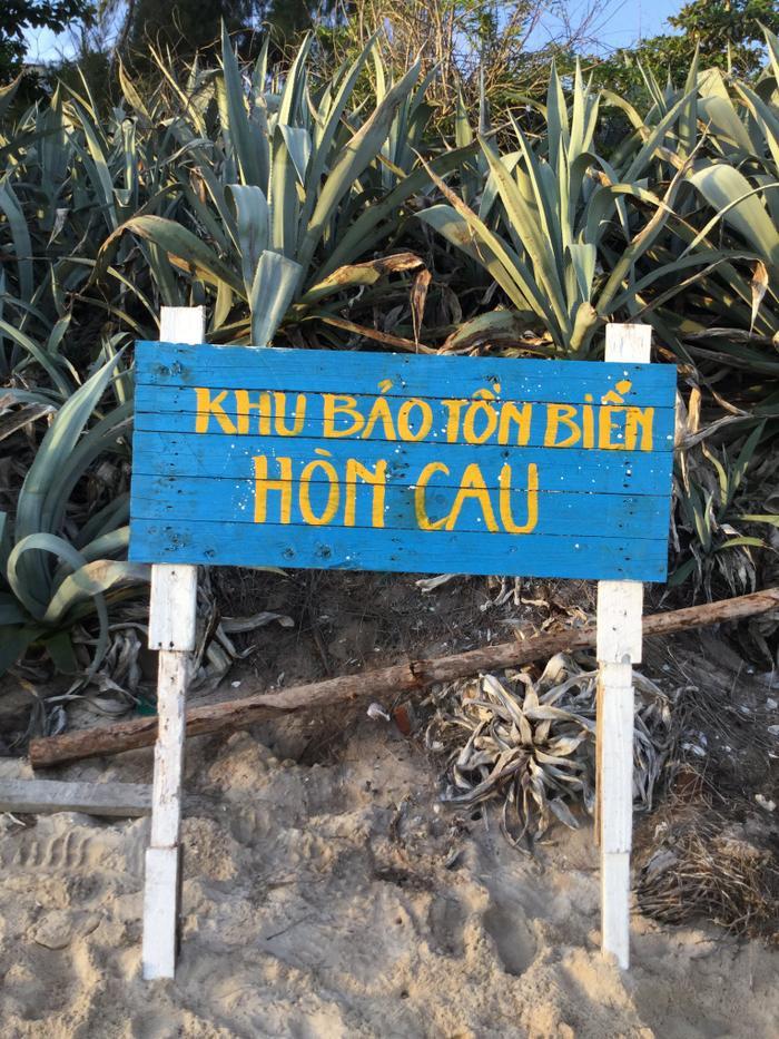 'Bóng hồng' duy nhất trên đảo Hòn Cau: Dành cả thanh xuân để đi theo dấu chân rùa biển Ảnh 3
