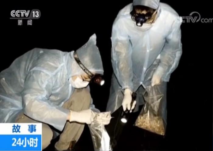 Các nhà khoa học ở Vũ Hán từng bị dơi cắn, lại 'nóng' nghi án Covid-19 thoát từ phòng thí nghiệm Ảnh 1