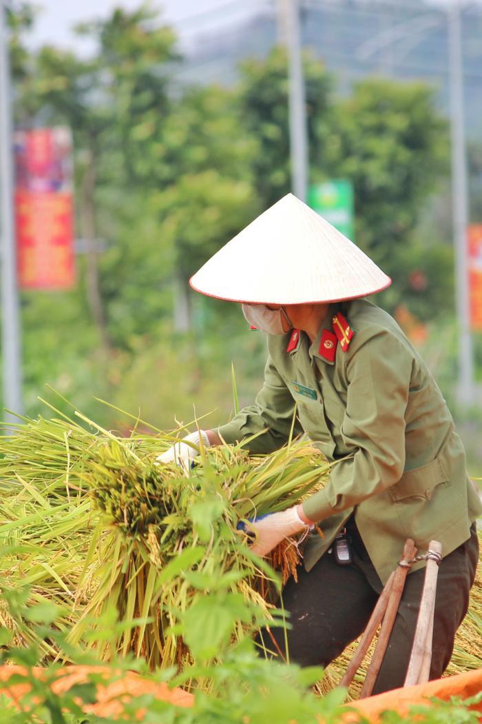 Bắc Giang: Lúa chín trĩu bông nhưng không có người gặt, công an xuống ruộng thu hoạch giúp dân Ảnh 9