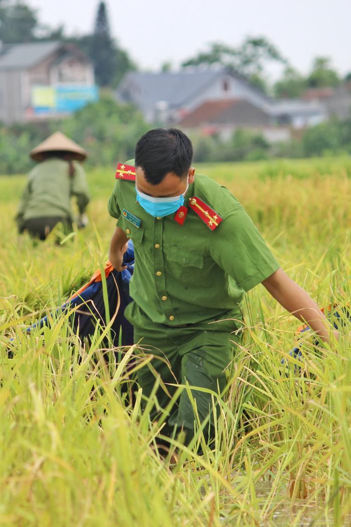 Bắc Giang: Lúa chín trĩu bông nhưng không có người gặt, công an xuống ruộng thu hoạch giúp dân Ảnh 7