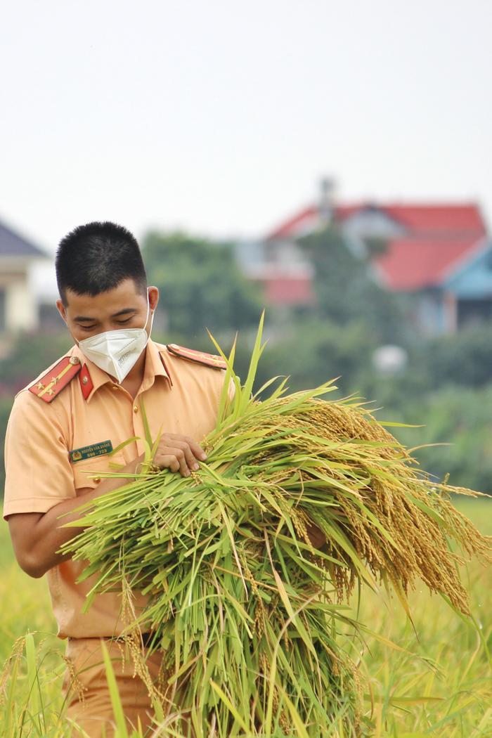Bắc Giang: Lúa chín trĩu bông nhưng không có người gặt, công an xuống ruộng thu hoạch giúp dân Ảnh 10