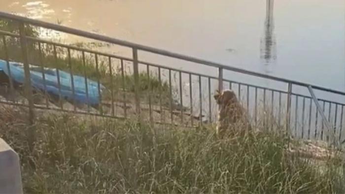 Chủ nhân trượt chân chết đuối, phản ứng của chú chó khiến cư dân mạng rơi nước mắt Ảnh 1