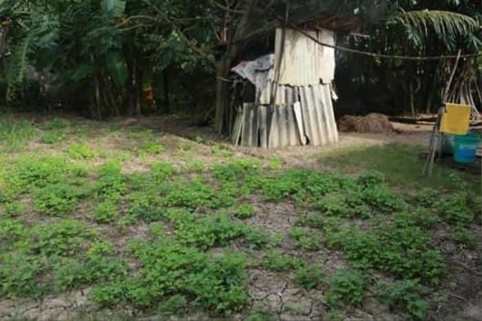 Nghẹn ngào nhìn căn nhà xập xệ ở quê của Hồ Văn Cường sau hơn 5 năm đi hát Ảnh 3