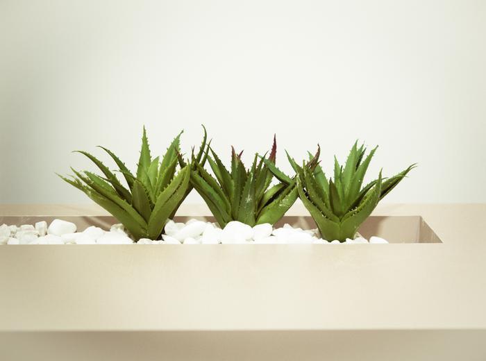 10 loại thực phẩm tự nhiên giúp phục hồi mái tóc hư tổn mùa hè Ảnh 2