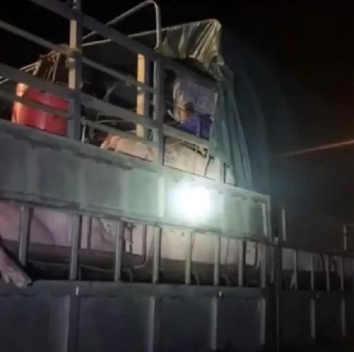 Quảng Ninh: Gần 20 người trốn trong xe chở lợn để né chốt kiểm dịch Ảnh 1