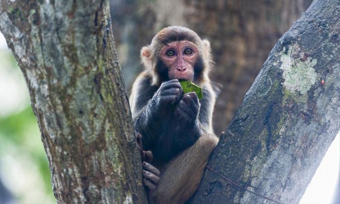 Trung Quốc ghi nhận ca tử vong đầu tiên do virus Monkey B Ảnh 1