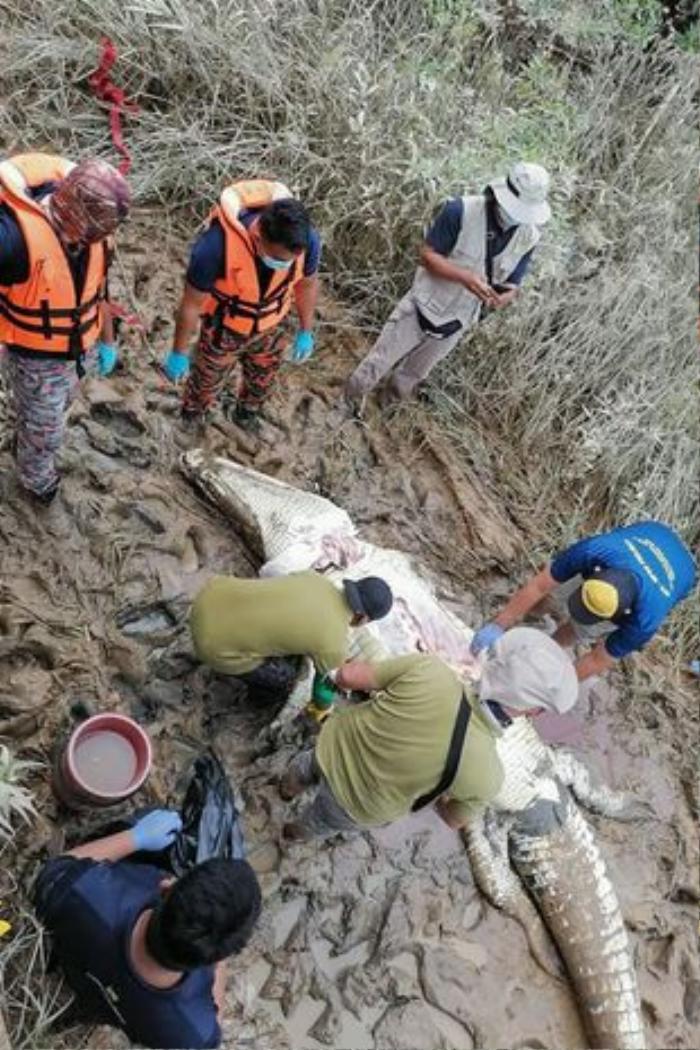 Những vụ cá sấu khổng lồ tấn công người ghê rợn nhất thế giới