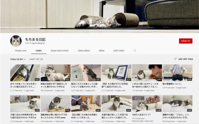 Chú mèo rinh nút Vàng YouTube, được kỷ lục Guinness ghi nhận Ảnh 1