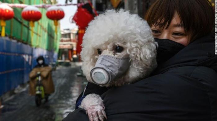 Covid-19 lây nhiễm từ vật nuôi sang người thế nào, cần làm gì để phòng tránh?