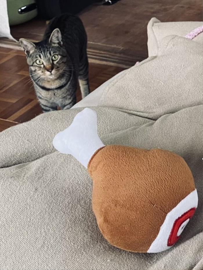 Thấy cô chủ bị sốt do tiêm vaccine Covid-19, mèo cưng có hành động đặc biệt khiến chủ nhân xúc động