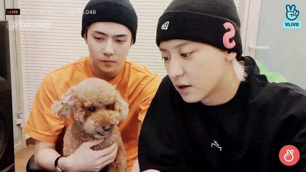Chanyeol và Sehun (EXO) bị giám đốc SM Entertainment trách mắng vì tự ý tung nhạc mới mà không xin phép? Ảnh 3