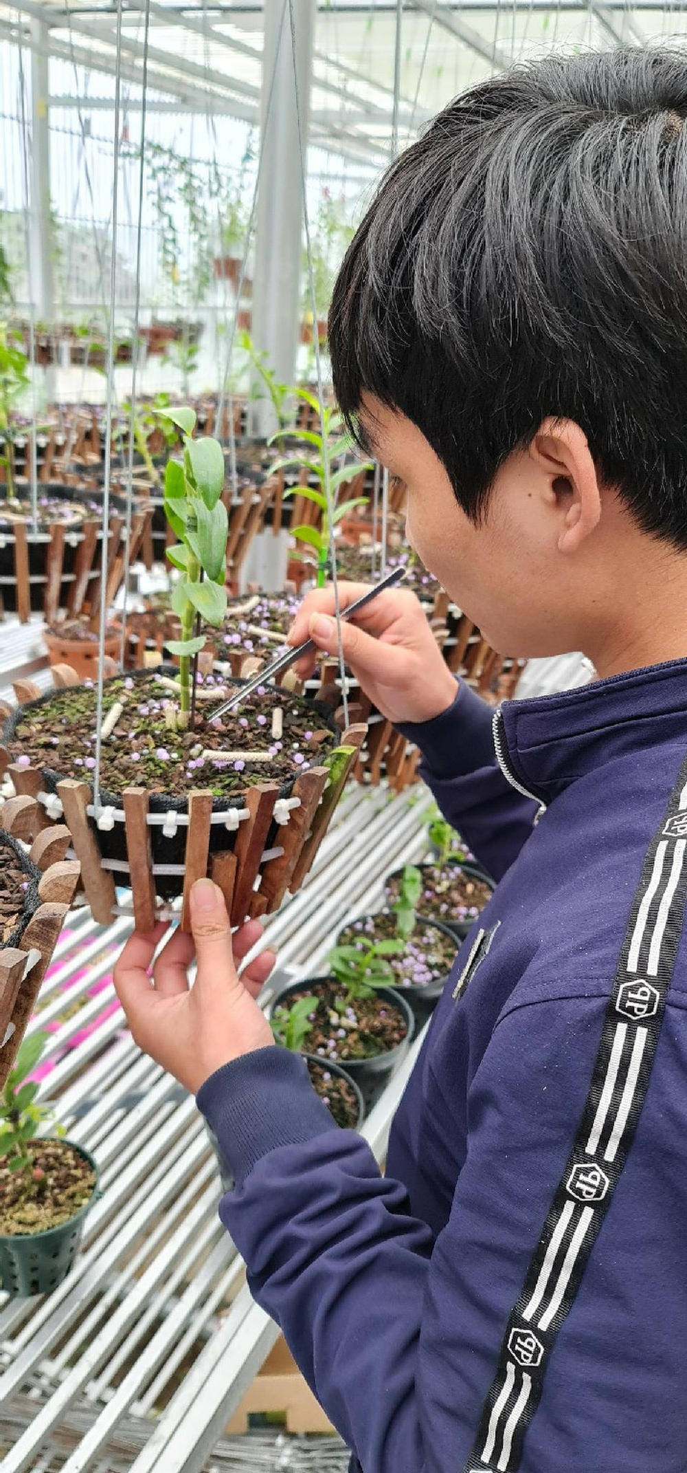 9X Nguyễn Văn Tùng 'chơi lan để thỏa niềm đam mê' Ảnh 2