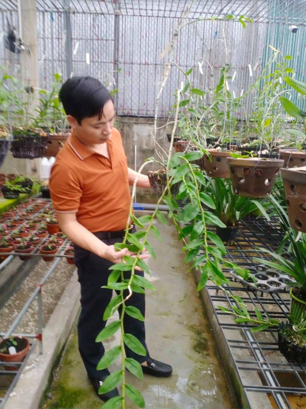 Ông chủ 7X Mạnh Hùng và bí quyết thành công khi trồng lan Ảnh 3