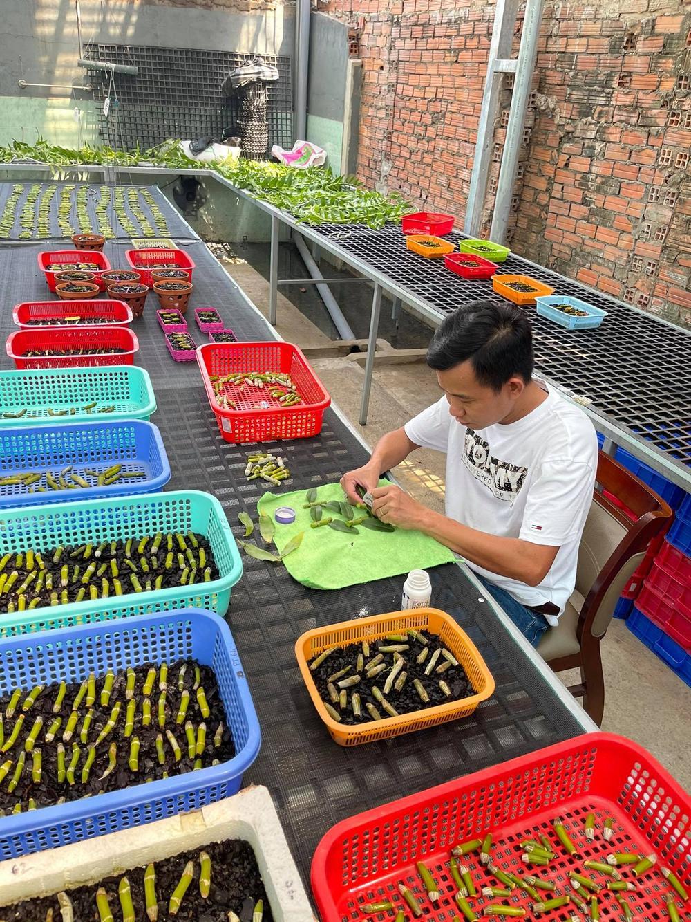 Phạm Minh Minh: Ông chủ vườn lan đi từ thử thách tới thành công Ảnh 8