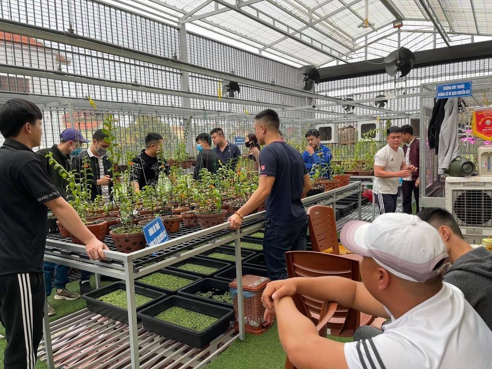 Đỗ Việt Đức - Từ chàng công nhân đến doanh nhân trồng lan thu nhập hàng tỉ đồng Ảnh 3