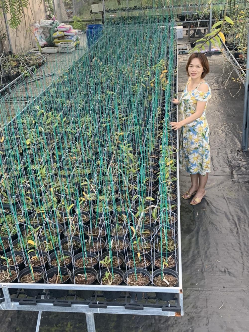 Bà chủ Vườn lan Thu Thanh: Cô gái đặc biệt trong giới chơi lan Ảnh 1