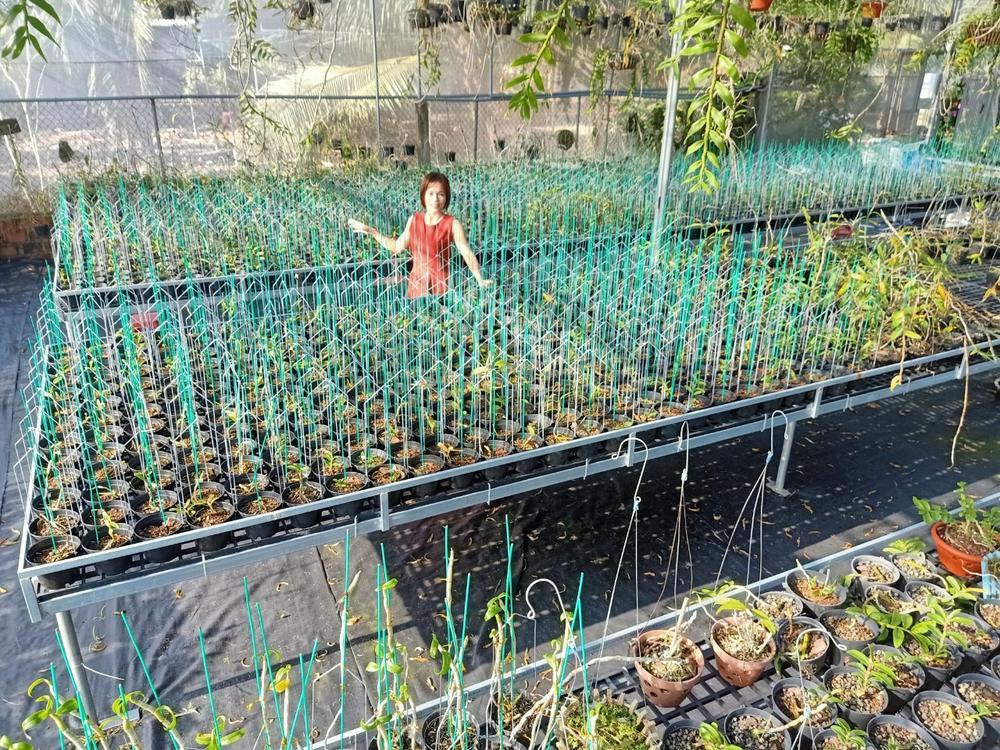 Bà chủ Vườn lan Thu Thanh: Cô gái đặc biệt trong giới chơi lan Ảnh 3