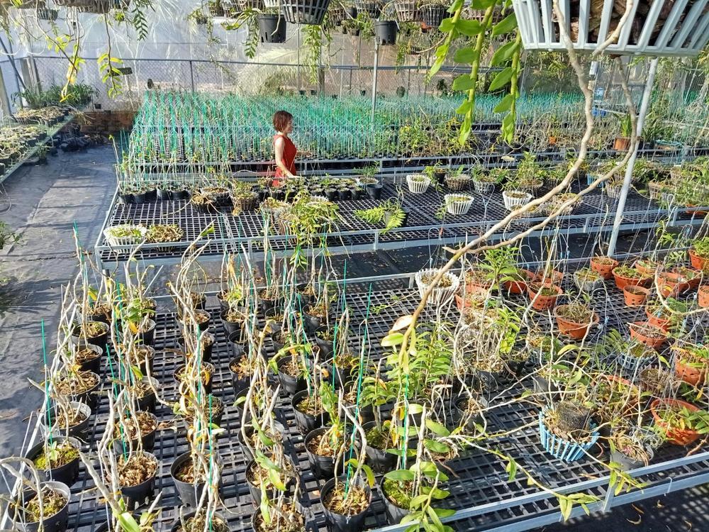 Bà chủ Vườn lan Thu Thanh: Cô gái đặc biệt trong giới chơi lan Ảnh 4