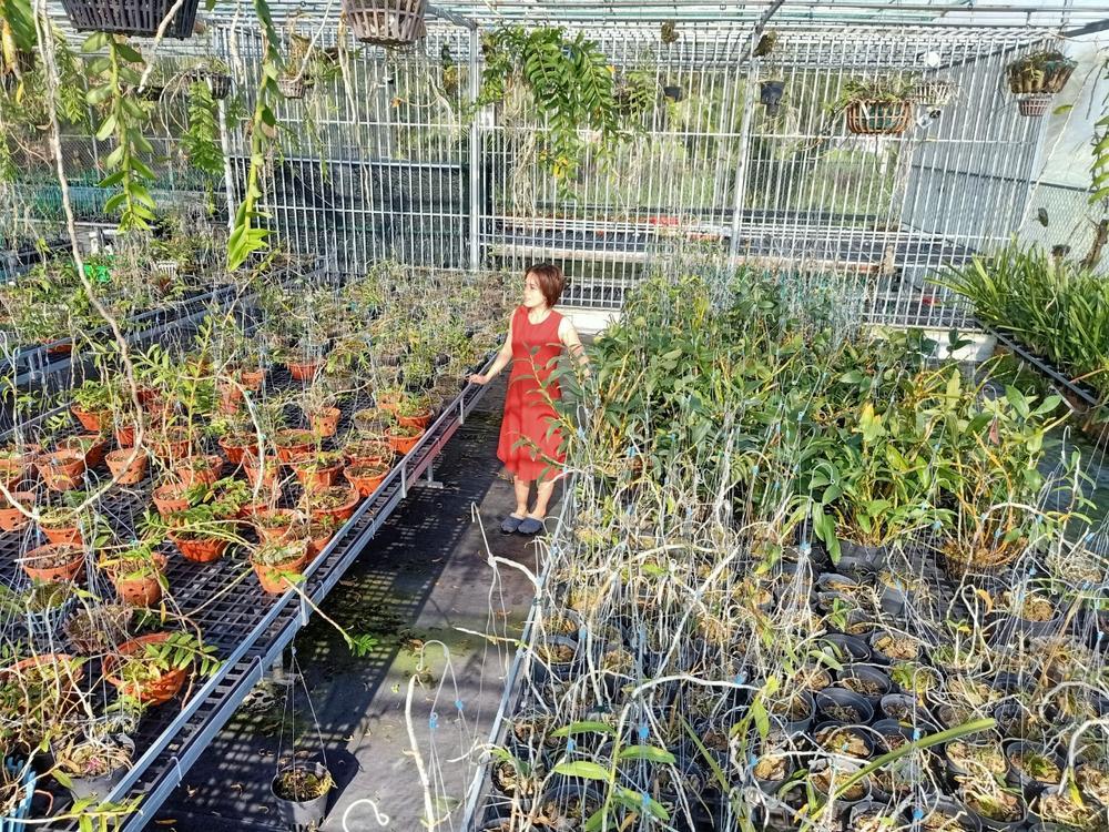 Bà chủ Vườn lan Thu Thanh: Cô gái đặc biệt trong giới chơi lan Ảnh 5