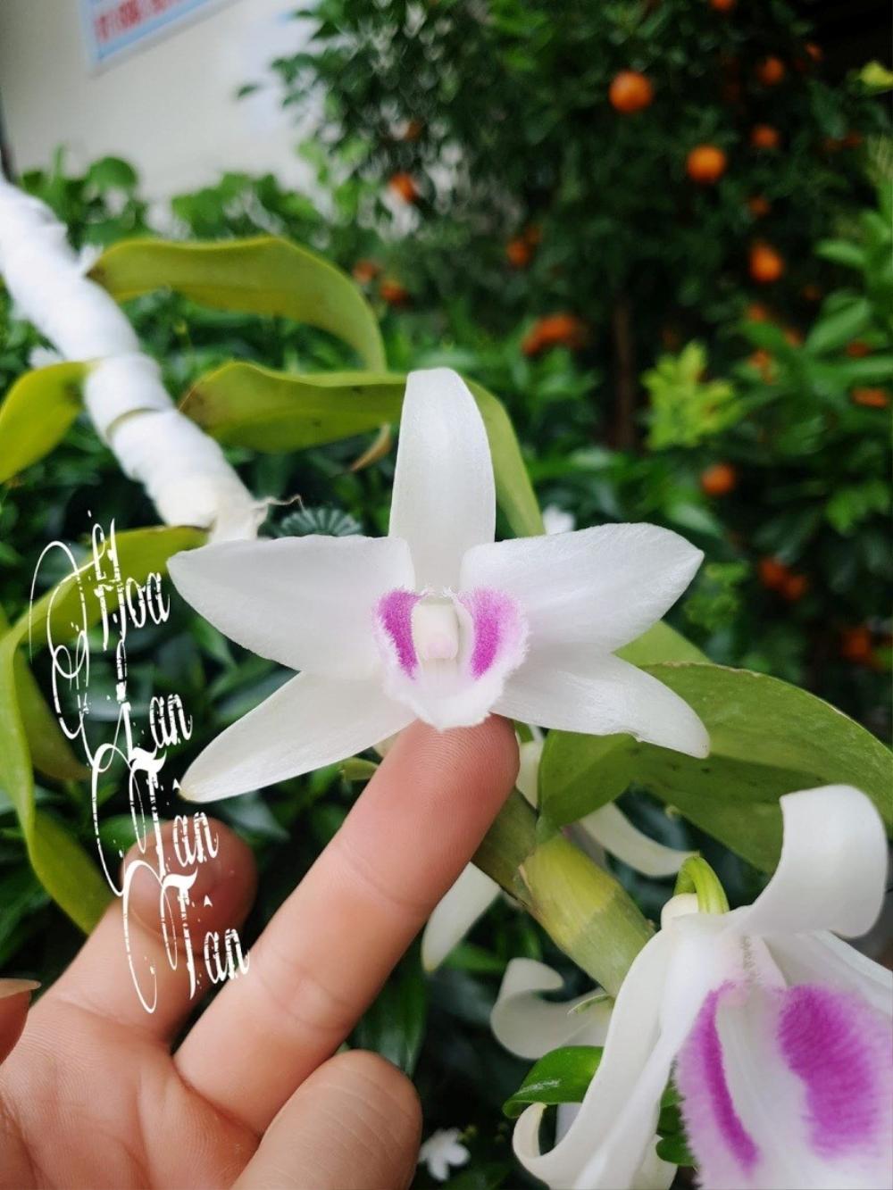 Nguyễn Duy Tân chia sẻ cách làm giàu từ cây hoa lan đột biến Ảnh 2