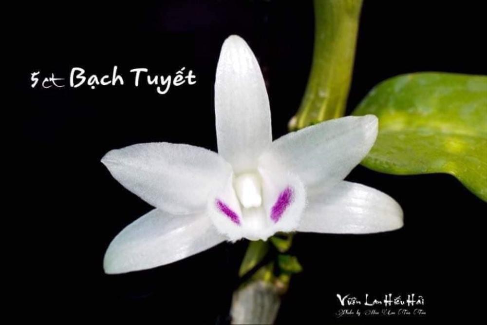 Nguyễn Duy Tân chia sẻ cách làm giàu từ cây hoa lan đột biến Ảnh 7