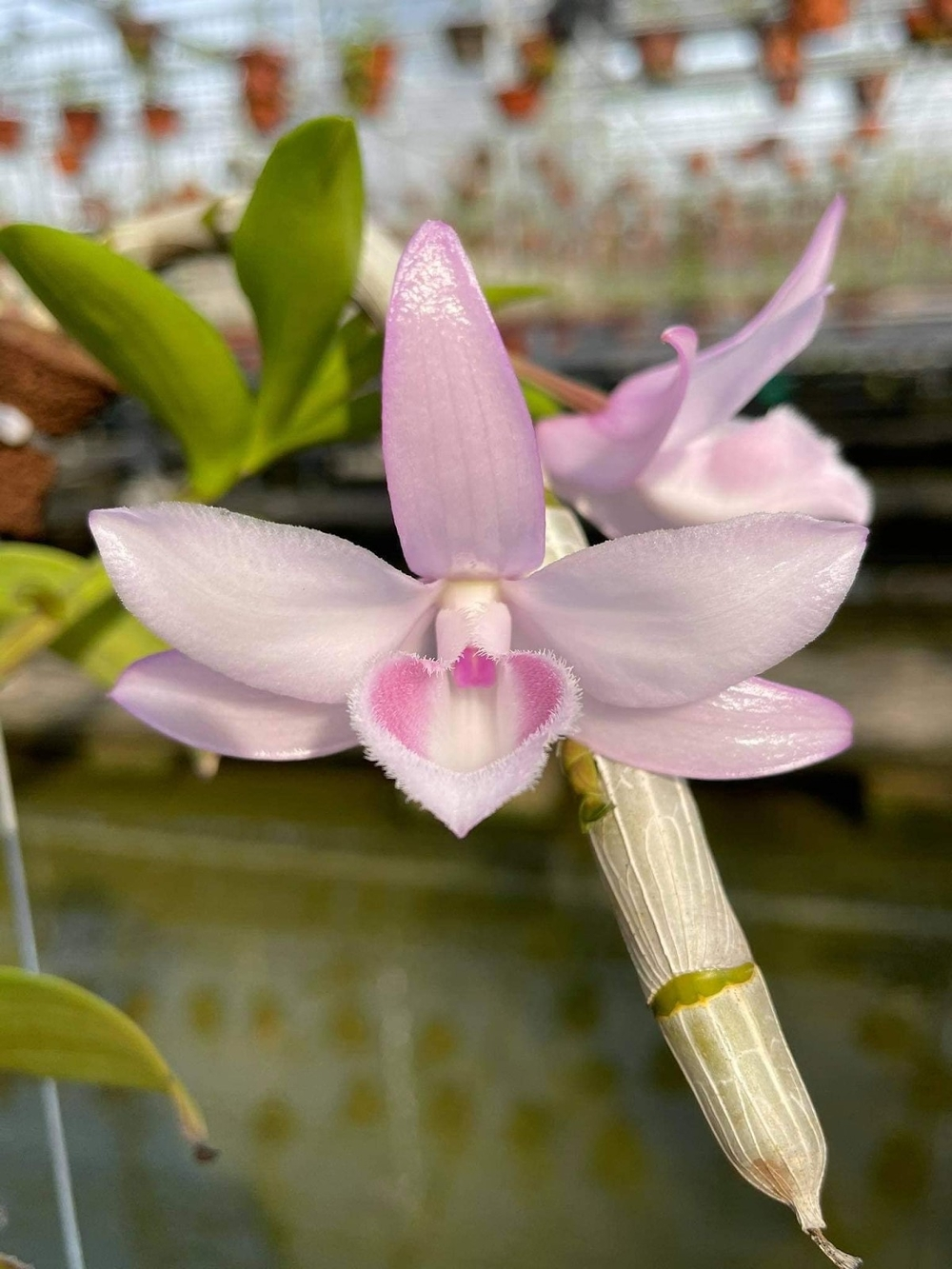 Nghệ nhân Tống Duy Thức: Hoa lan đã mang lại cho tôi nhiều điều đặc biệt Ảnh 3