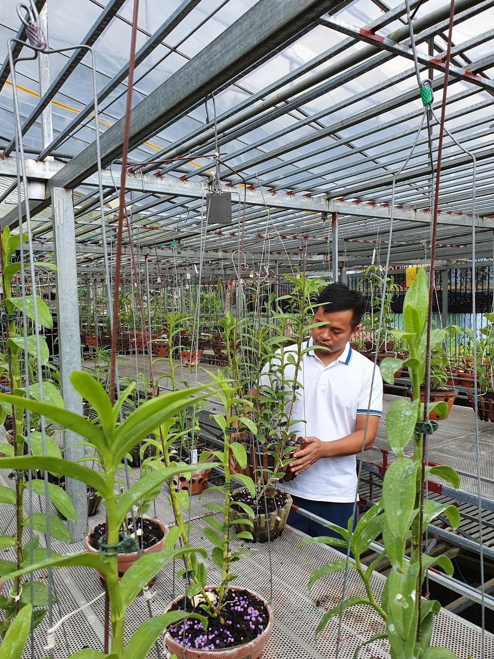Ông chủ vườn lan Dương Xuân Tú thành công nhờ đam mê từ nhỏ Ảnh 2