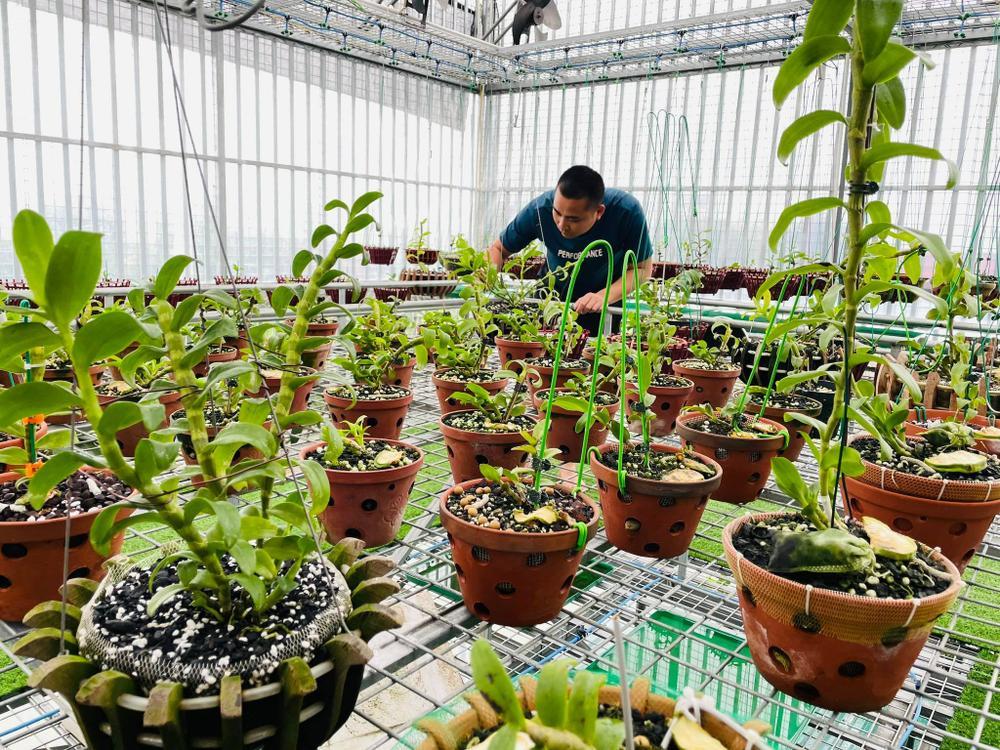 Ông chủ vườn lan Huỳnh Long và mối cơ duyên đặc biệt với hoa lan Ảnh 5