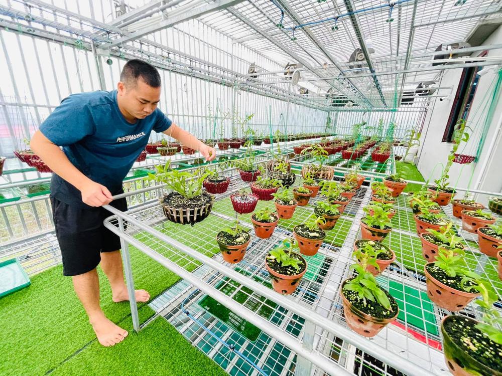 Ông chủ vườn lan Huỳnh Long và mối cơ duyên đặc biệt với hoa lan Ảnh 3
