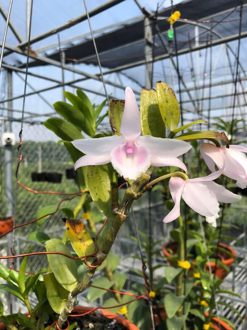 Nghệ nhân hoa lan Trần Quốc Hoà: Hành trình khởi nghiệp thành công đến từ niềm đam mê mãnh liệt với hoa lan Ảnh 2