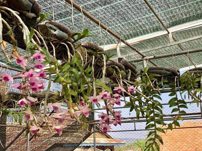 Vũ Đỗ Hoàng Tín chia sẻ quá trình thực hiện đam mê to lớn với hoa lan Ảnh 5
