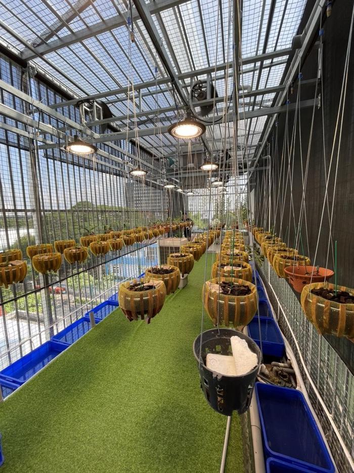 Nghệ nhân Nguyễn Quang Giang chia sẻ bí quyết trồng và chăm sóc hoa lan phát triển tốt Ảnh 5