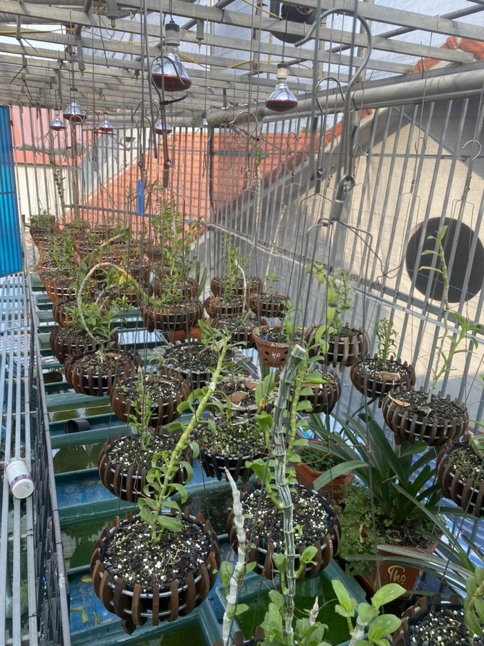 Nghệ Nhân Phạm Anh Dũng chia sẻ bí quyết trồng lan ai cũng có thể làm được Ảnh 2