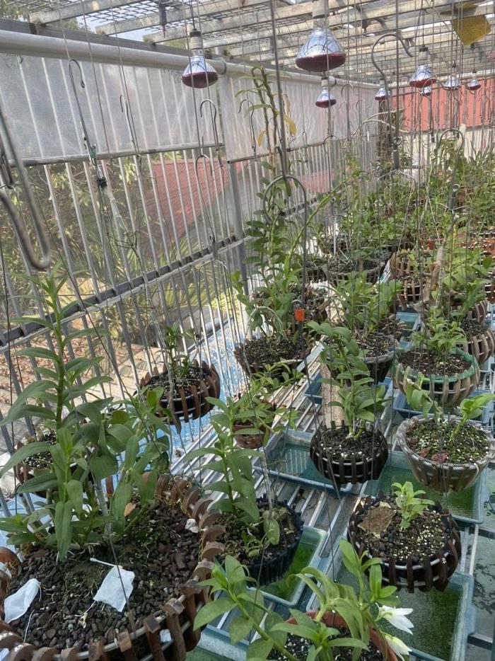 Nghệ Nhân Phạm Anh Dũng chia sẻ bí quyết trồng lan ai cũng có thể làm được Ảnh 3