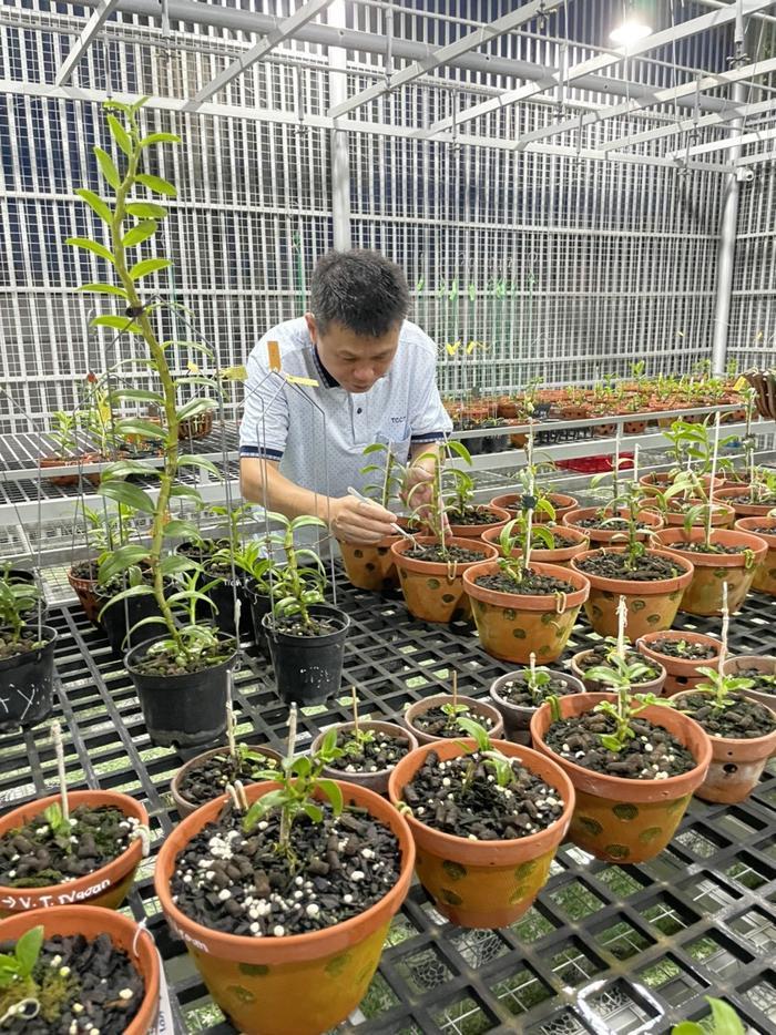 Nghệ nhân Nguyễn Duy Toàn chia sẻ kinh nghiệm chọn giống lan phát triển tốt Ảnh 4