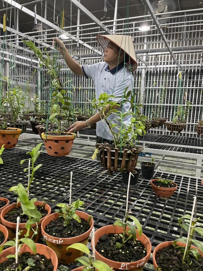 Nghệ nhân Nguyễn Duy Toàn chia sẻ kinh nghiệm chọn giống lan phát triển tốt Ảnh 3