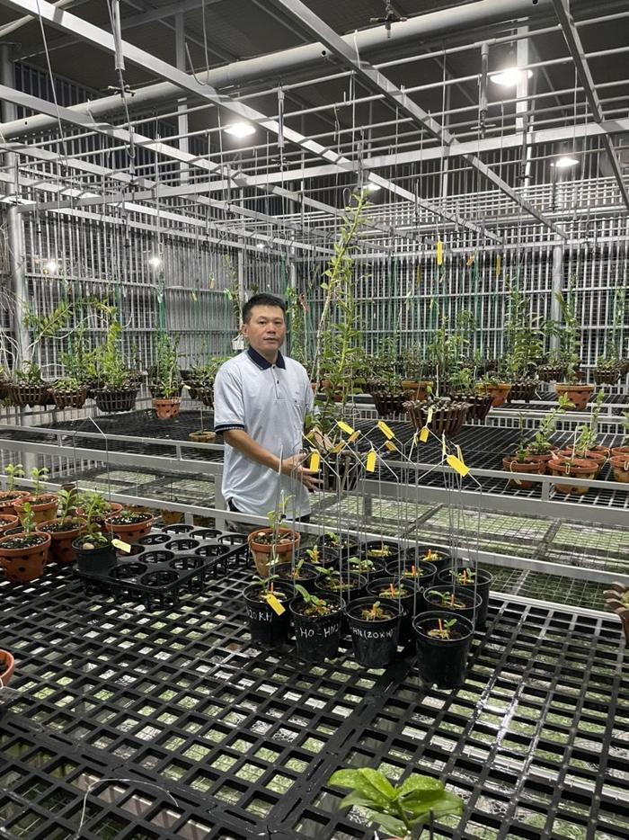 Nghệ nhân Nguyễn Duy Toàn chia sẻ kinh nghiệm chọn giống lan phát triển tốt Ảnh 5