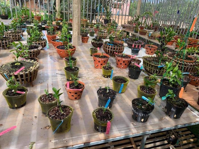 Bí quyết chăm sóc vườn lan của nghệ nhân Nguyễn Thành Chuyên Ảnh 3