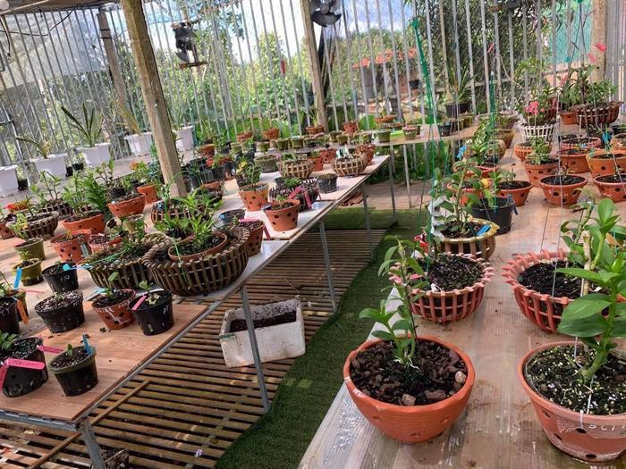 Bí quyết chăm sóc vườn lan của nghệ nhân Nguyễn Thành Chuyên Ảnh 2